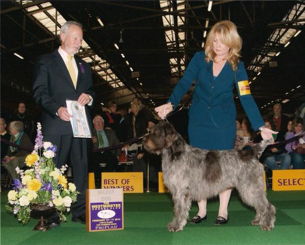 Flash_Select_Dog_WKC_2014_001.jpg